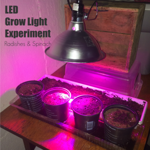 LED grow light experiment Radishes Spinach From the Family With Love