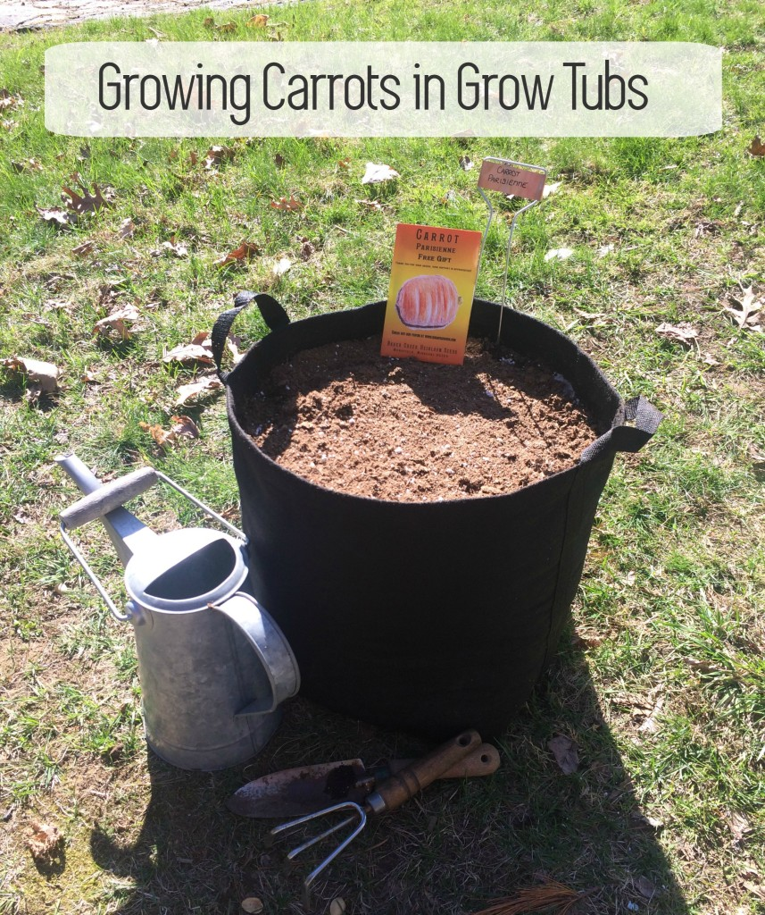 Planting Carrots in Grow Tubs From the Family WIth Love Container Garden